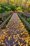 De herfst, Boone Fork Bridge, Blauw Ridge Parkway stock foto