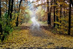 De herfst in bos Stock Fotografie