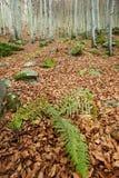 De herfst in bos Royalty-vrije Stock Foto's