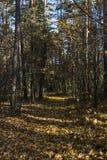 De herfst in bos royalty-vrije stock afbeeldingen