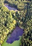De herfst in bos Stock Foto
