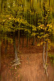 De herfst in bos Stock Afbeelding