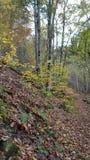 De herfst in bos royalty-vrije stock foto