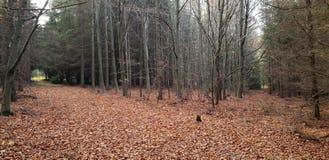De herfst, bos, bladeren, aard, Tsjechische republik royalty-vrije stock foto