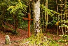 De herfst bos en mystiek kruis bij de weide stock foto's