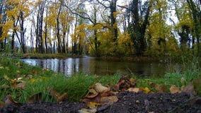 De herfst bos en stromende kreek stock footage