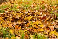 De herfst in bos, gele bladeren Stock Fotografie