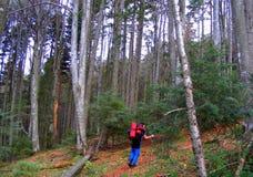 De herfst in bos, het Nationale Park van Piatra Craiului royalty-vrije stock foto