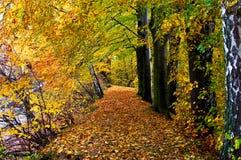 De herfst bos, horizontaal Royalty-vrije Stock Afbeeldingen