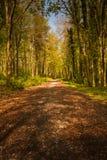 De herfst in bos in Ierland Royalty-vrije Stock Foto's