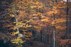 De herfst bos Kleurrijke bomen Royalty-vrije Stock Afbeeldingen