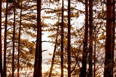 De herfst bos, lange dikke mooie bomen in oranje tonen, Bulgarije stock foto