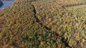 De herfst bos luchtmening stock footage