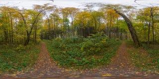 De herfst bos sferisch panorama Stock Afbeeldingen