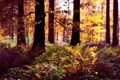 De herfst bosachtergrond Stock Fotografie