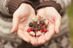De herfst bosbessen en bloemen in meisjeshanden Stock Foto
