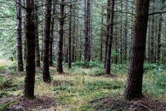 De herfst bosbos met licht die 99 tonen stock fotografie