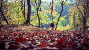 De de herfst bosherfst in Duitsland royalty-vrije stock afbeelding