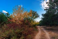 De herfst boslandschap met weg en blauwe hemel Royalty-vrije Stock Fotografie