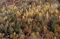 De herfst bospastelkleur met aardachtig kleurenpalet Stock Afbeelding