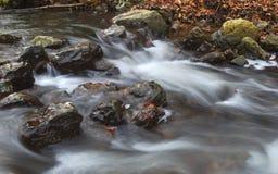 De herfst bosstroom Stock Foto's
