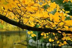 De herfst in Boston Royalty-vrije Stock Foto's