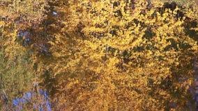 De herfst bosvijver met bezinningen stock footage