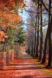 De herfst bosweg Stock Afbeeldingen