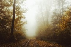 De herfst bosweg door de mist royalty-vrije stock afbeelding