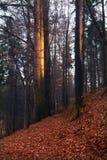 De herfst bosweg in een afgezonderd bos royalty-vrije stock afbeeldingen