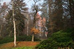 De herfst bosweg in een afgezonderd bos stock afbeeldingen