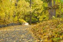 De herfst bosweg met esdoornbladeren Stock Foto