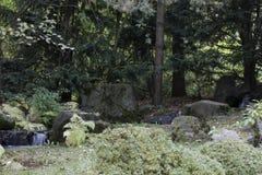 De herfst in de botanische tuin Royalty-vrije Stock Afbeelding