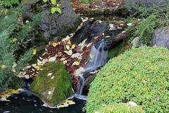 De herfst in de botanische tuin Royalty-vrije Stock Afbeeldingen