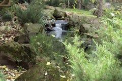 De herfst in de botanische tuin Stock Fotografie
