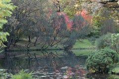 De herfst in de botanische tuin Stock Foto