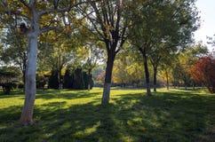 De herfst in de Botanische Tuin van Zibo stock fotografie