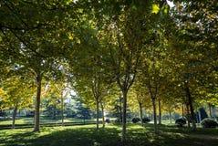 De herfst in de Botanische Tuin van Zibo stock afbeeldingen
