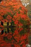 De herfst in Canada Royalty-vrije Stock Fotografie