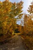 De herfst in Colorado Rocky Mountains stock fotografie