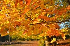 De herfst colorsw Royalty-vrije Stock Afbeelding