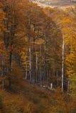 De herfst in countrside in Roemenië Stock Foto's