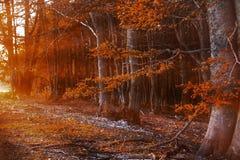 De herfst in countrside in Roemenië Stock Foto