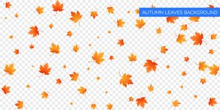 De herfst dalende bladeren op transparante achtergrond Vector herfstgebladerteval van esdoornbladeren De herfst achtergrondontwer Stock Fotografie
