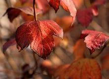 De herfst/Daling Stock Foto