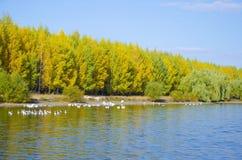 De herfst, daling Stock Foto