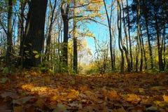 De herfst, dalings bosweg van rode bladeren naar licht royalty-vrije stock foto