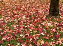 De herfst, dalingsbladeren Stock Afbeeldingen