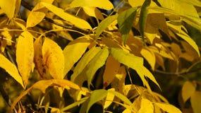 De herfst, dalingsboom met kleurrijke bladeren royalty-vrije stock fotografie