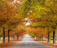 De herfst, dalingsbos royalty-vrije stock foto